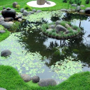 Beautiful Pond Design With Natural Accent
