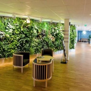 Natural Sunlighting For Green Interior And Wooden Floor For Modern Green Office Design